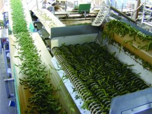 green beans,digital sorting,Key Technology,beans sorting,vegetable sorting