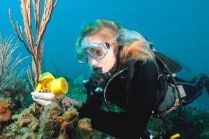 مراقبة تحت الماء ، Tinytag ، مسجل بيانات ، datalogger ، مسجل بيانات درجة الحرارة ، مراقبة بيئية ، مسجل بيانات Aquatic 2
