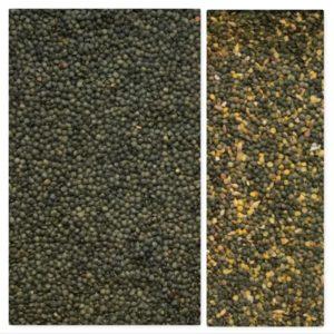 Black lentils sorting, IST sorter, Italian sorting