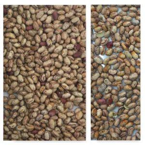 Beans sorting, Borlotti beans sorting, IST sorter, Italian sorter