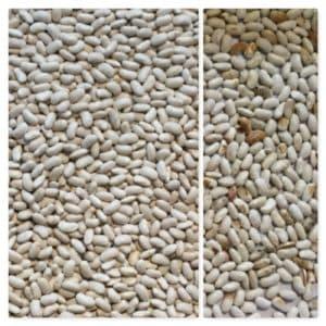 Beans sorting, IST sorter, Italian sorter, beans sorting