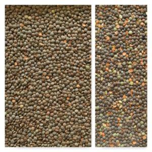 Lentil sorting, IST sorter, color sorting, optimal sorting