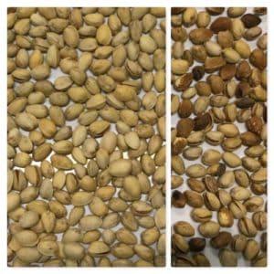 IST sorter, pistachios sorting, IST sorter