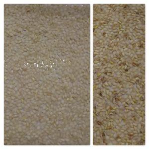 IST sorter, round rice sorting, rice sorting, Italian sorting