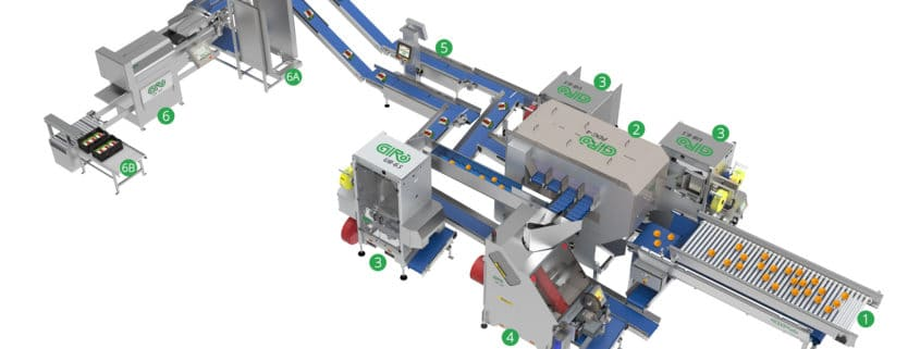 Net packaging, Giro, packing line, Al Thika Packaging, packing for fruit