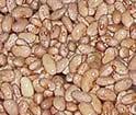 Bean sorting, sorter for bean