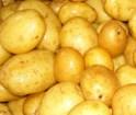 Potatoes sorting, sorter for potatoes