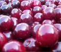 cherries sorting, cherry sort, cherry sorting by Raytec,